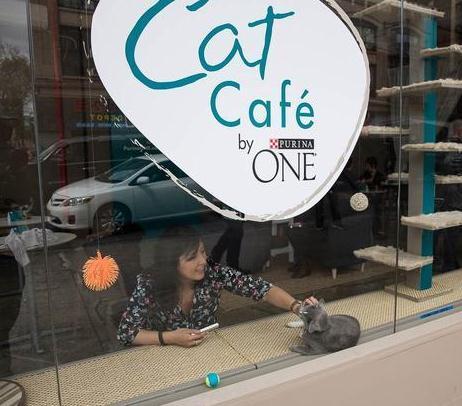 猫咪咖啡馆加盟