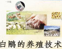 白鹇养殖加盟