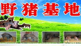 野猪养殖招商