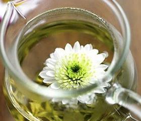 虫草菊花茶加盟