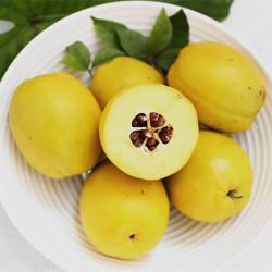 云南特色水果