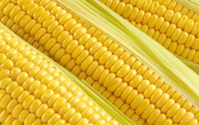 晶脆一号 该品种由台湾引进超甜玉米双交种,中熟品种,植株半紧凑,植株高约200厘米,穗位高约90厘米,果穗长筒型,苞叶带小剑叶,穗型美观,穗长20厘米左右,穗粗5厘米左右,穗行数16行左右,鲜苞重450-800克,在我国华北地区春播出苗至采收鲜穗85天左右,在我国甜玉米主产区,具有亩产1600公斤的潜力。籽粒金黄色,色泽亮丽,结实紧密,籽粒饱满,行粒排列整齐,生吃口感甜脆。抗病性好,抗大、小斑病、病毒病。是鲜穗、煮食或速冻保鲜加工的理想品种。 多克拉 美国外引进高品质双色超甜水果玉米,植株高180厘米左