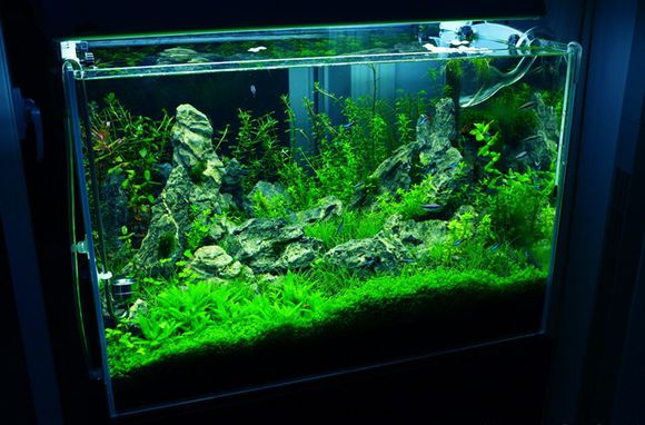 新手买了生态鱼缸,那么怎样才能养好水呢?