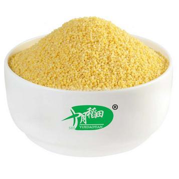 十月稻田加盟图片