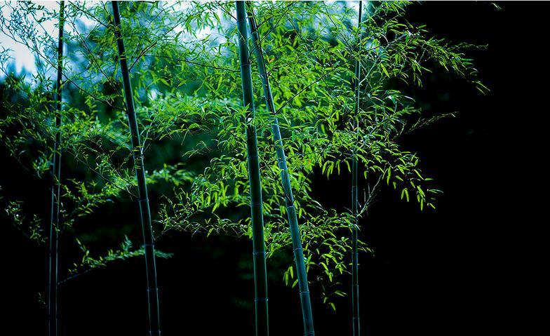 立足中国竹业几十年来,浙江腾龙竹业集团公司的目标始终是突出竹产业