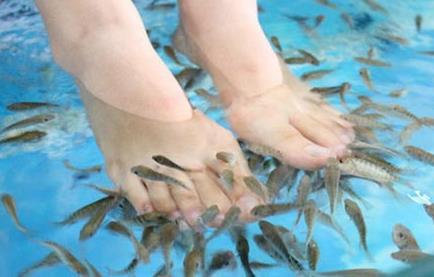 亲吻鱼足疗诚邀加盟