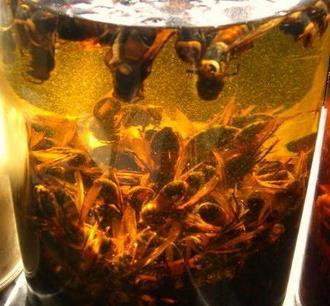 虎头蜂酒加盟图片