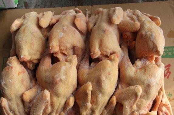 安氏乐业小型西装鸡