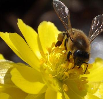尧顺黑蜂蜂蜜加盟图片