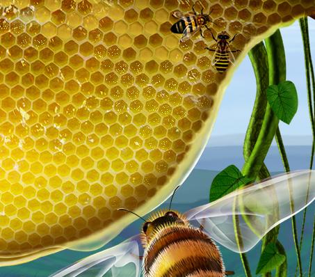 雪峰山唐氏蜂蜜加盟图片