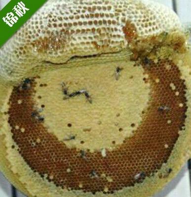 锦秋蜂蜜加盟图片