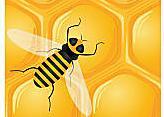 雷雀山上品蜂蜜
