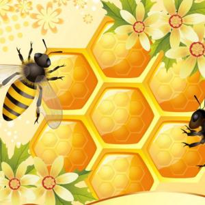 蜜源蜂蜜誠邀加盟