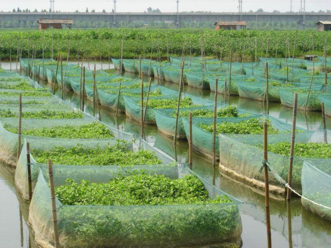 养殖黄鳝的利润和成本