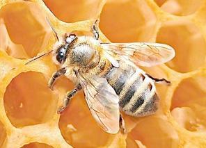 煜图蜂蜜诚邀加盟