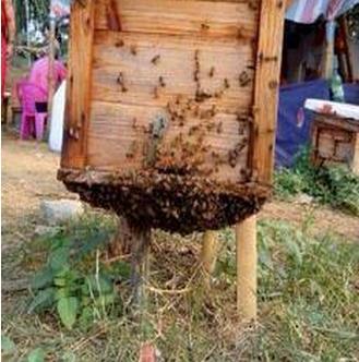 玛友蜂蜜加盟图片