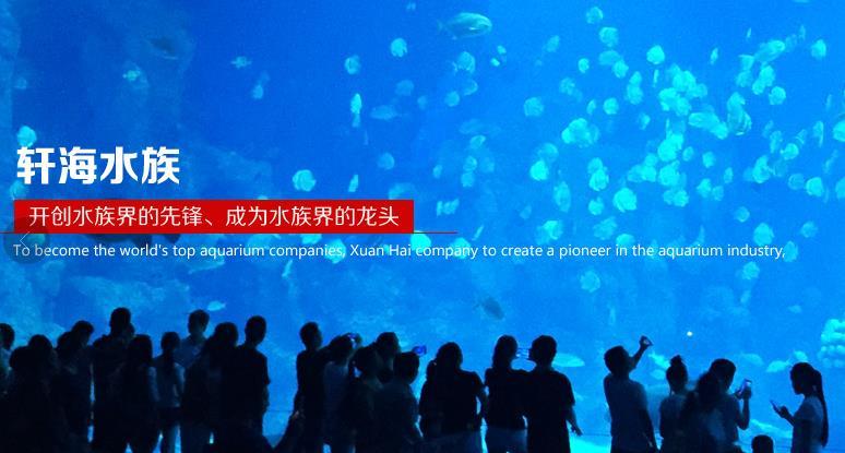 轩海金鱼缸加盟