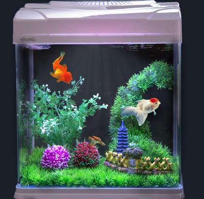 轩海金鱼缸