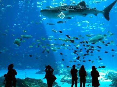 创意水族馆加盟