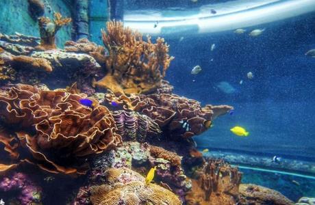 东海龙宫水族馆加盟图片