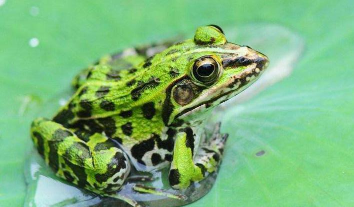青蛙養殖加盟