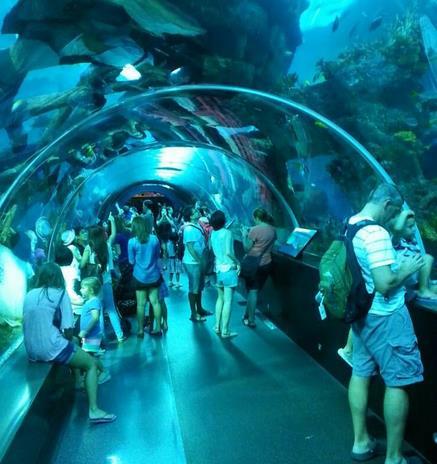 水族馆加盟