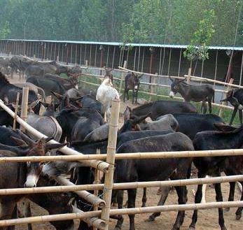驴养殖加盟