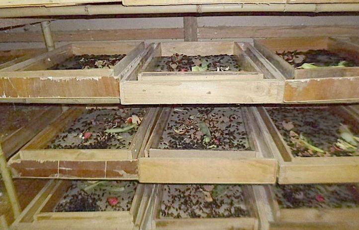 黄粉虫养殖加盟
