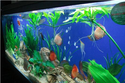 生态鱼缸什么牌子好 生态鱼缸价位