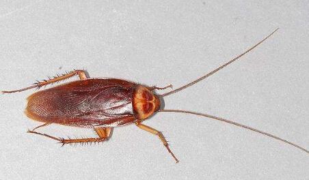 倾巢出动之嗜血蟑螂 图片合集