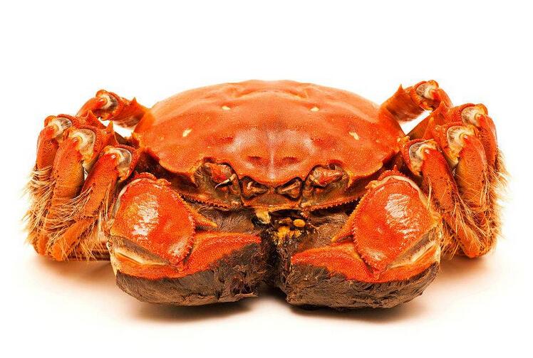 优品大闸蟹加盟