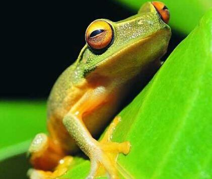 泰蛙杂交9号加盟案例图片