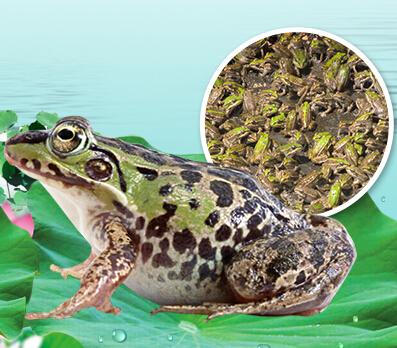 泰蛙杂交9号加盟实例图片