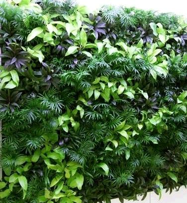 仿真植物全景画加盟