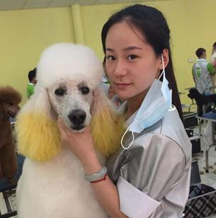 宠物美容培训学校