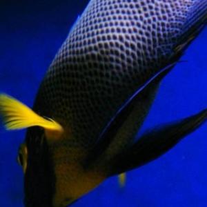 观赏鱼店加盟图片