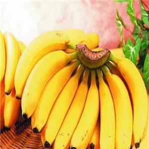 湛江市优质香蕉加盟