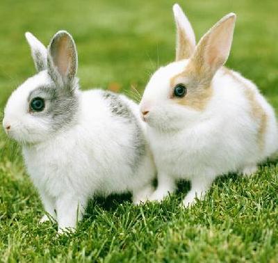 盛佳野兔养殖