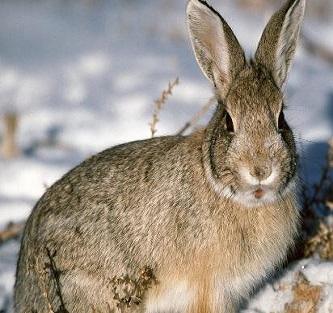 農福生兔子養殖