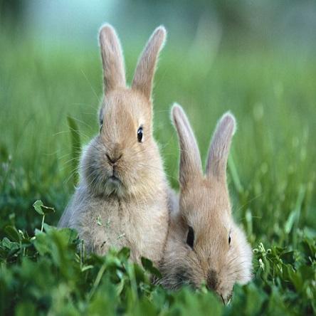 富祥兔子养殖