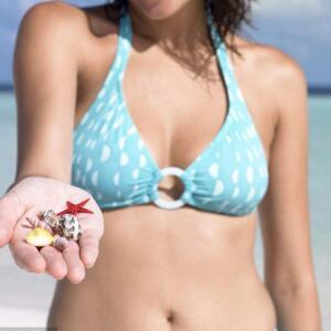螺沙贝壳泳装加盟图片