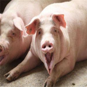 生态养猪技术大全诚邀加盟