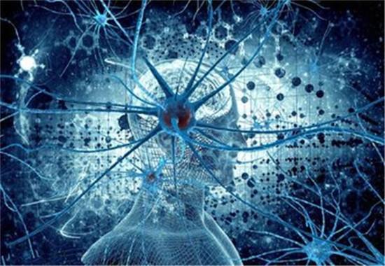 大脑神经元的作用