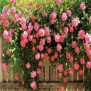 美洁雅无土花卉