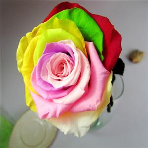 七彩花卉鮮花