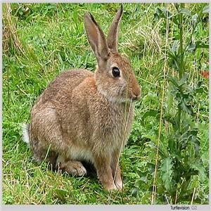 野兔养殖诚邀加盟