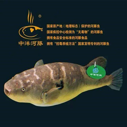 中洋河豚水產品