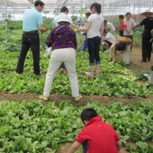 九连环蔬菜加盟图片