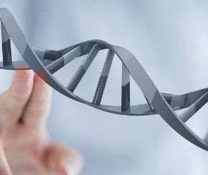 龙基因加盟图片