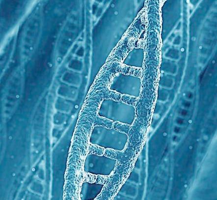 博宁洛克基因加盟图片